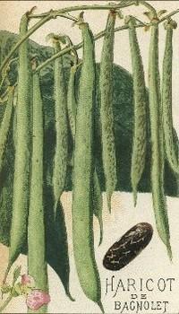 Hibiscus Graines Géant Rouge Hibiscus PALUSTRIS GIGANTE 3 Graines Jardin S0651 Décoration